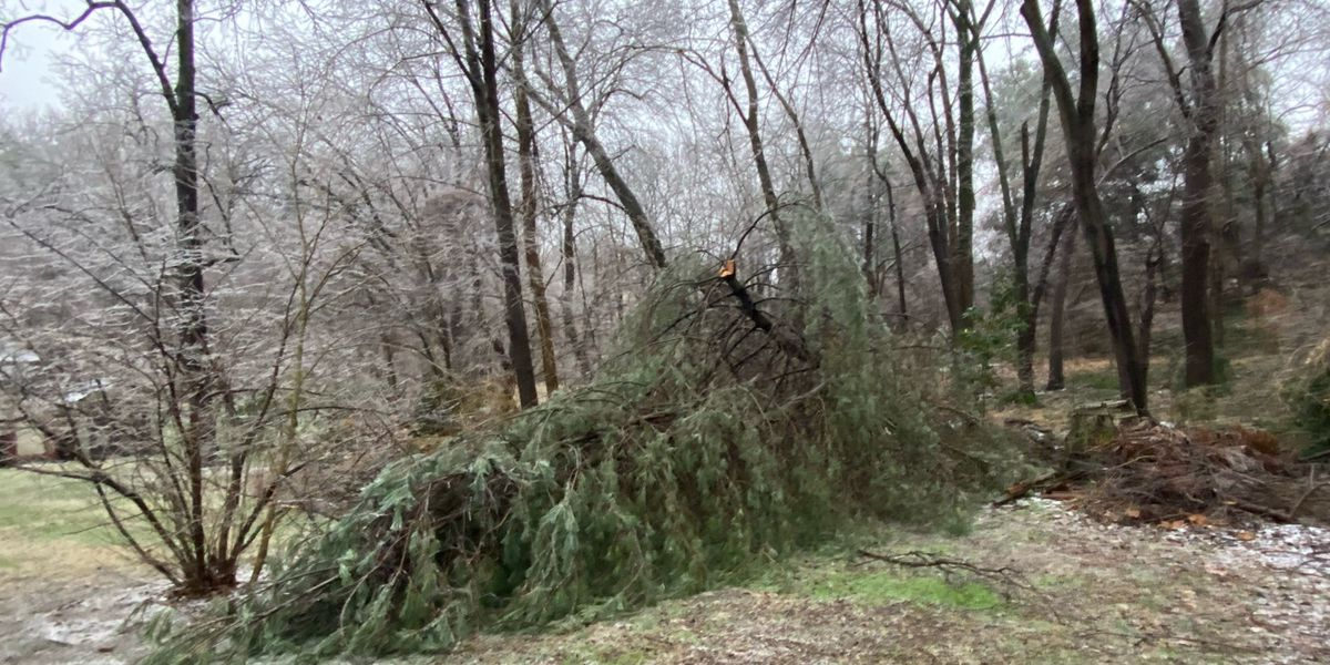 Ice and sleet bring down trees, power lines