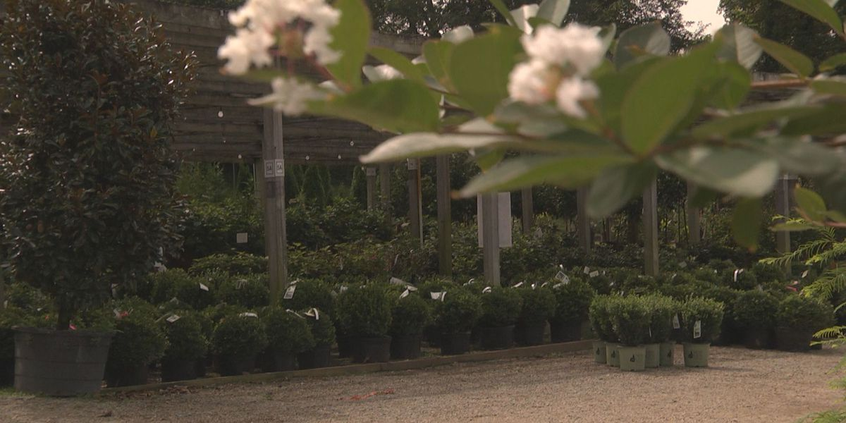 Ivy Nursery owner: fall is a great time for planting