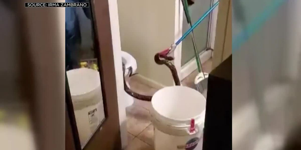 'I lost all trust in restrooms:' Calif. couple finds 6-foot-long snake in toilet