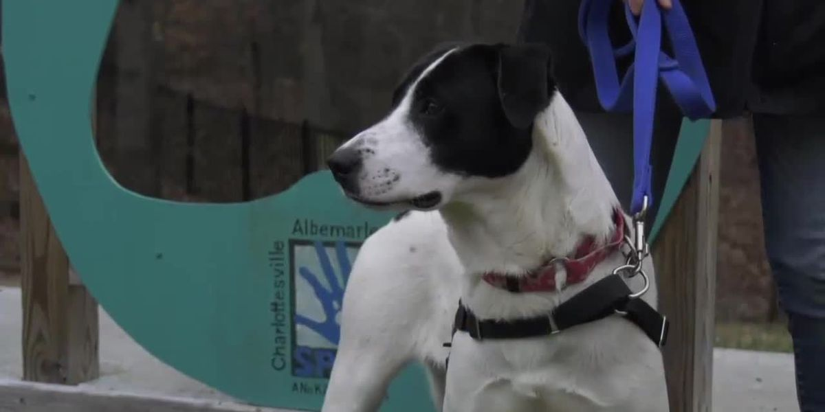 Charlottesville-Albemarle SPCA breaks adoption record in 2020