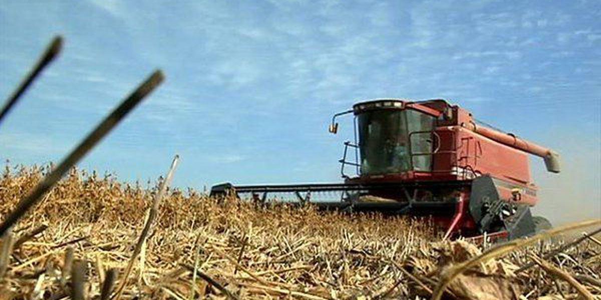 Judge pauses loan forgiveness program for farmers of color