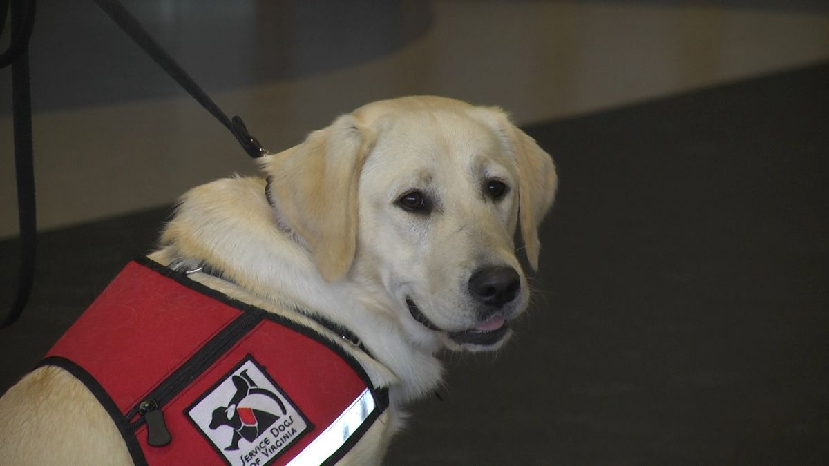 Service Dogs Virginia hosts first virtual training camp