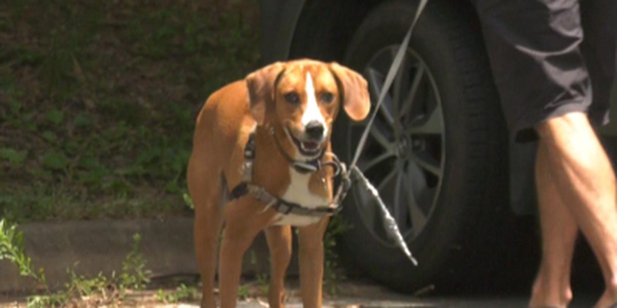 Charlottesville-Albemarle SPCA hosts drive-thru clinic