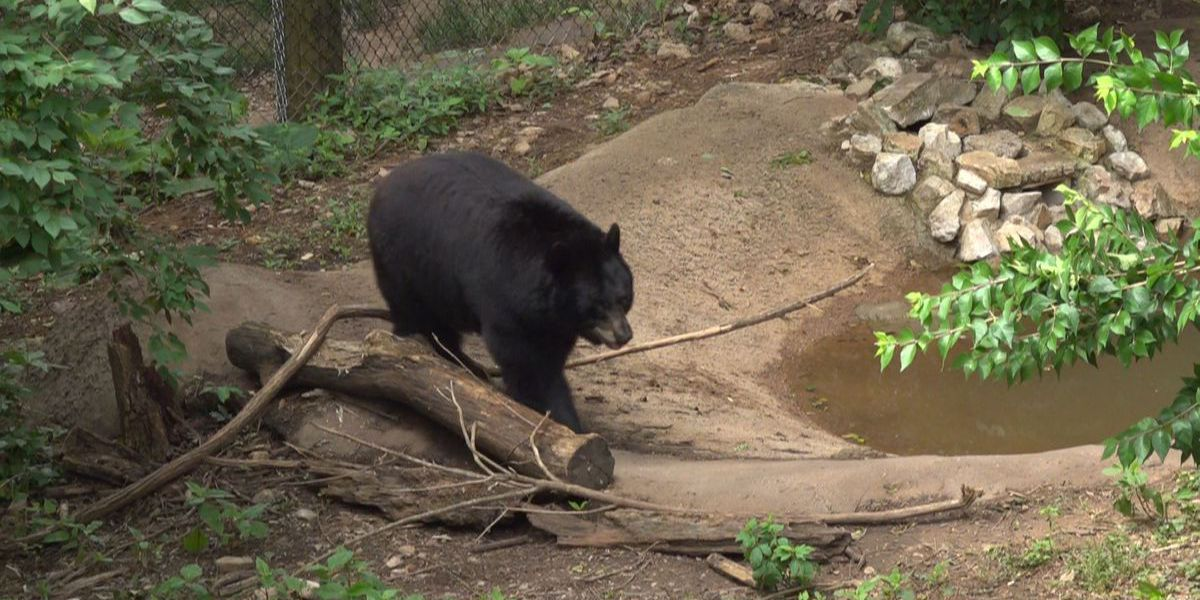 Mill Mountain Zoo launches box subscription program