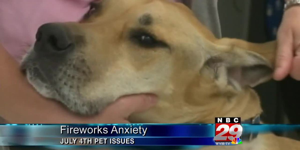Reminder: fireworks can be stressful for man's best friend