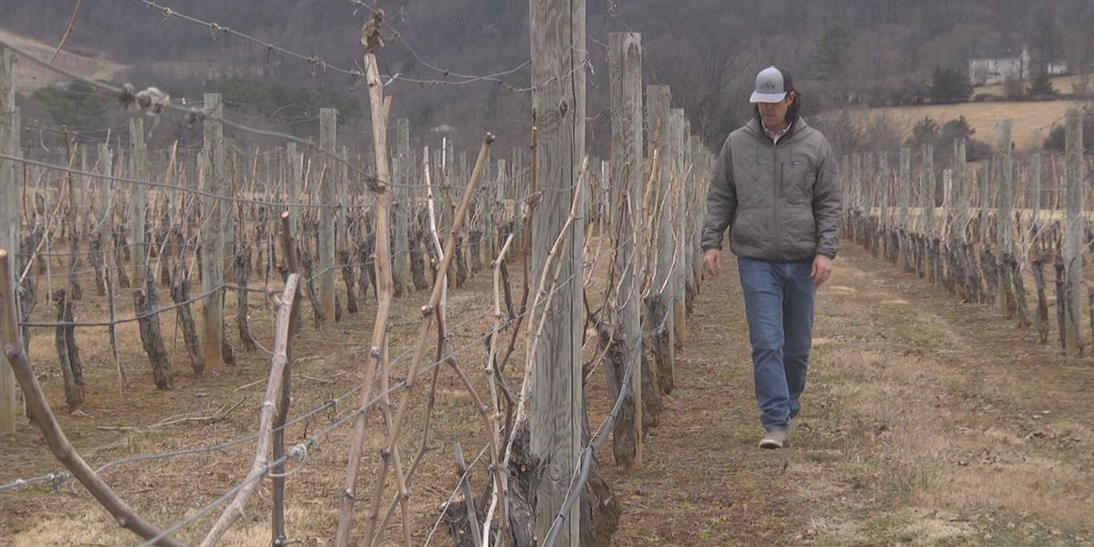 King Family Vineyard co-owner awarded grower of the year by Virginia Vineyard Association