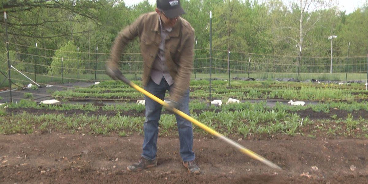 Charlottesville High School teacher maintains school garden, donates produce to community