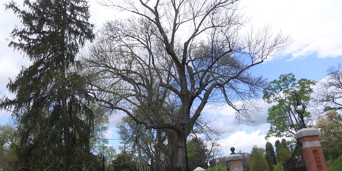 Staunton launches Tree Tour celebrating 25 years as a 'Tree City'