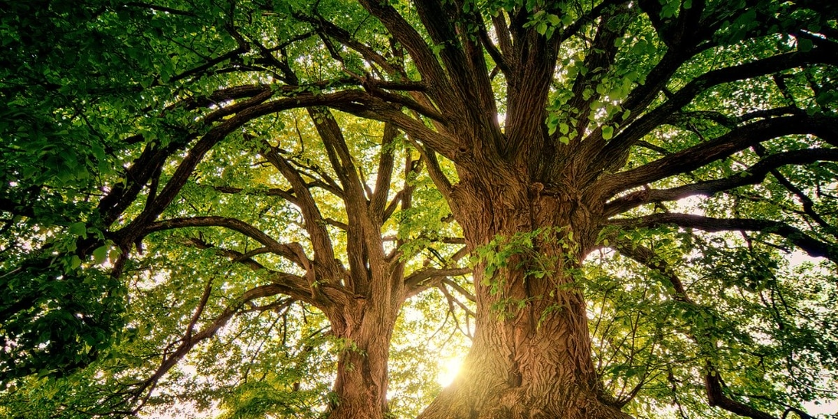 AAA 'Batteries for Trees' program sets goal of planting 8,000 trees in honor of Earth Day, National Arbor Day