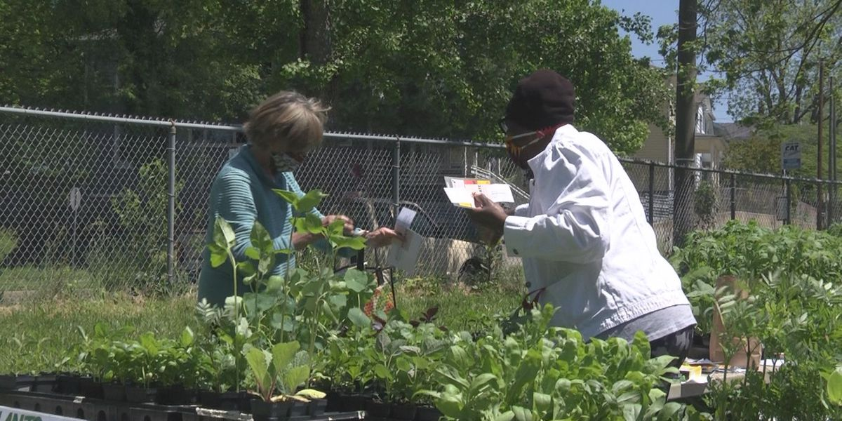 Cultivate Charlottesville hosts seedling drive