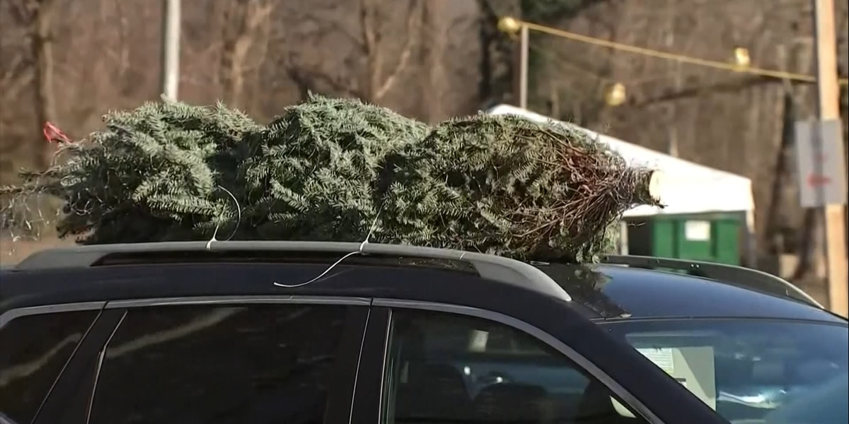 Albemarle County offering free Christmas tree recycling