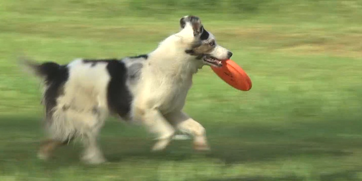 'Toss and Fetch' champions in Fluvanna Co. raise awareness about dogs with special needs
