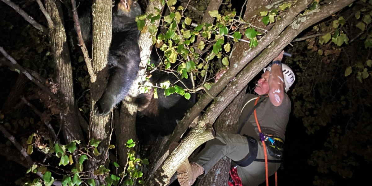 Virginia Department of Wildlife Resources rescues bear stuck in tree