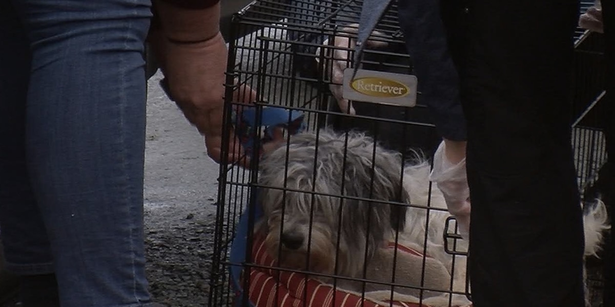 Free emergency rabies clinic in Fluvanna County serves hundreds
