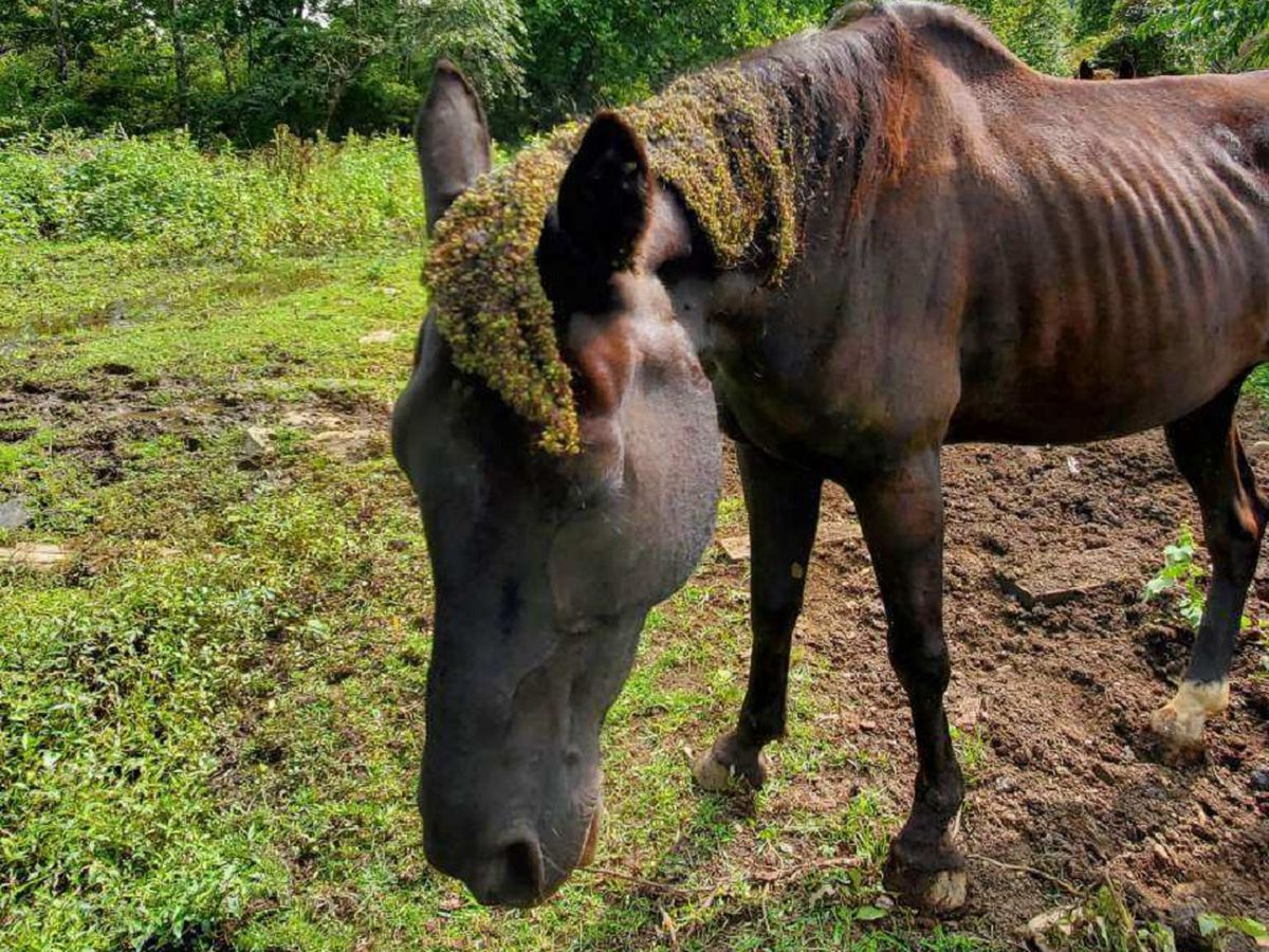 Greene Co. Sheriff's Office seizes 3 horses from Stanardsville area