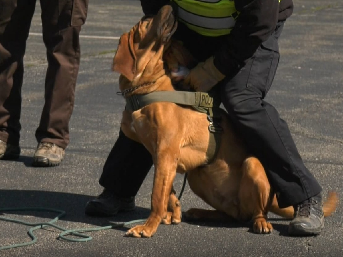 Louisa County Sheriff's Office trains bloodhounds in annual seminar