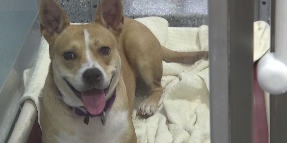 Groups partnering, hope to boost pet adoption
