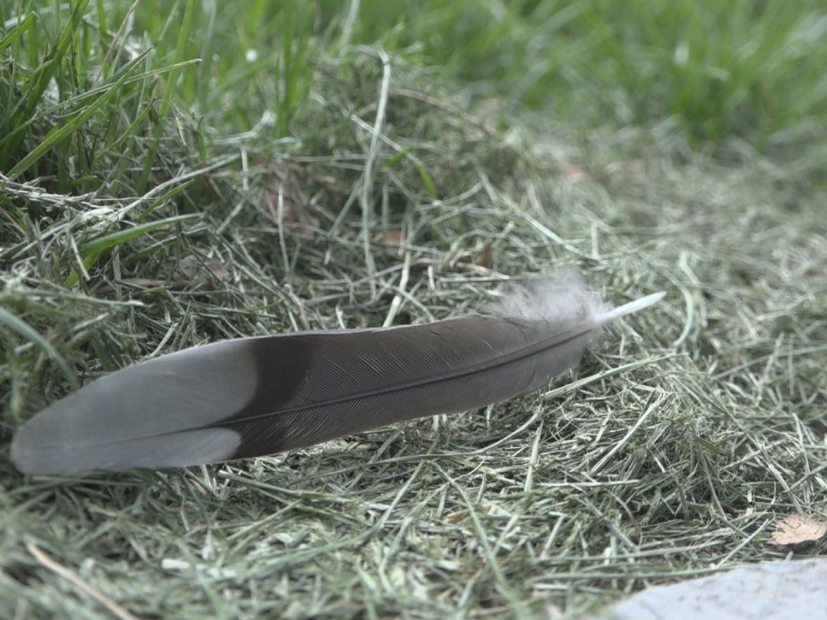 Wildlife officials receive preliminary results after finding multiple dead birds in Harrisonburg