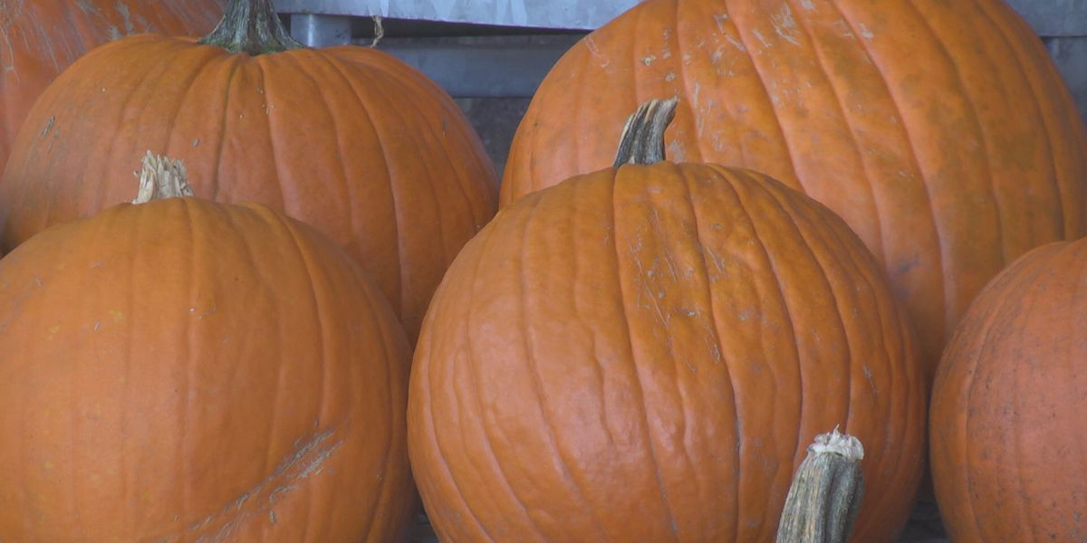 Charlottesville hunger relief group starts first annual pumpkin drive