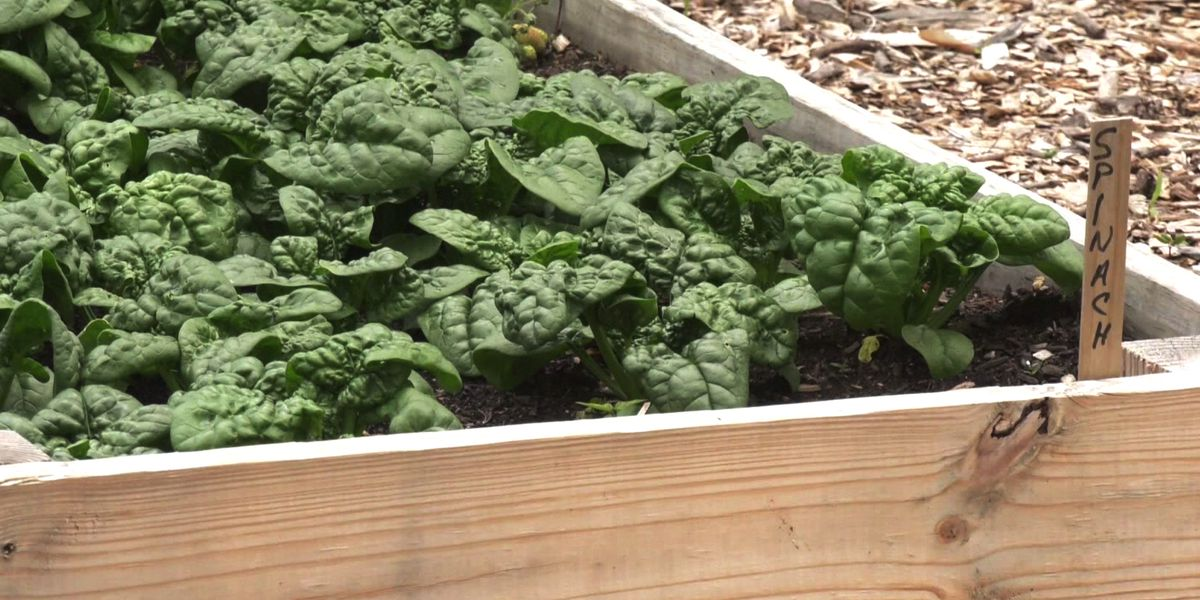 Charlottesville's City Schoolyard Garden uses grant money to transport healthy food