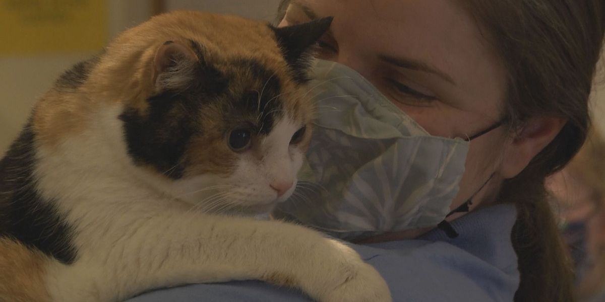 Charlottesville-Albemarle SPCA searching for holiday foster families
