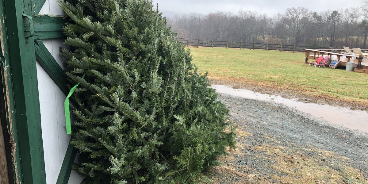 Albemarle County vineyard owner selling Christmas trees to honor daughter's memory