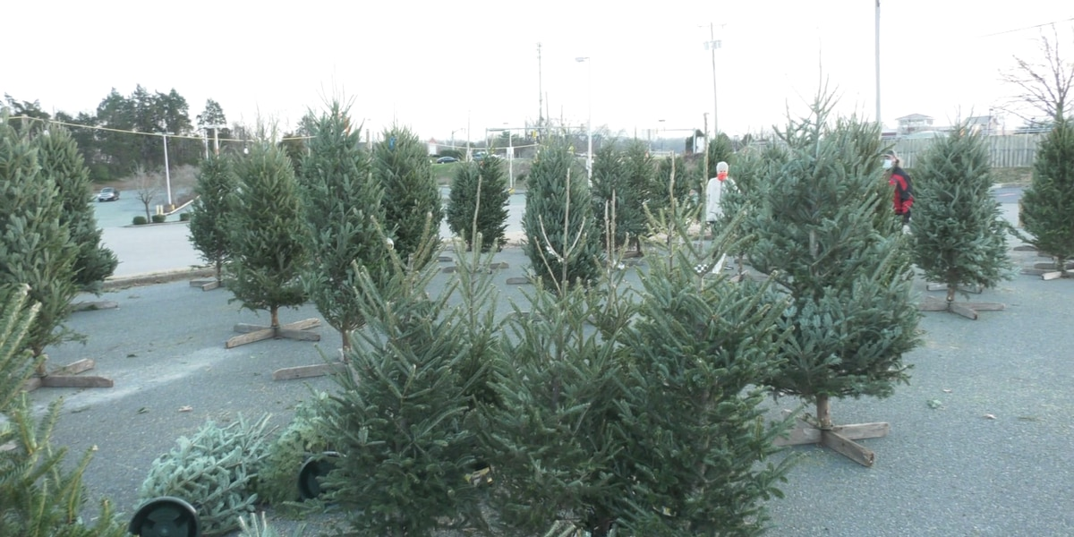Christmas trees selling fast in Charlottesville and Albemarle