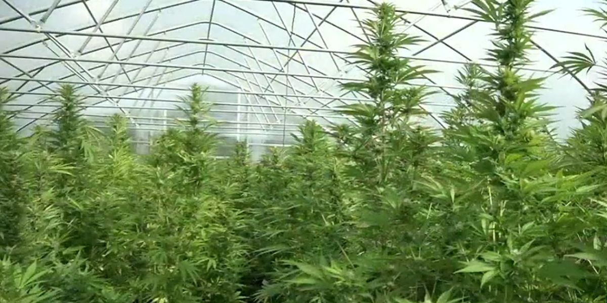 Almost $3M invested in Rockingham Co. hemp fiber, CBD extraction facility