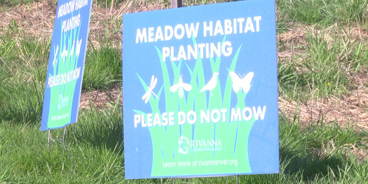 Rivanna Conservation Alliance replant meadow to keep waterways clean